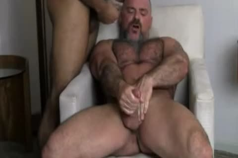 homo Bears wazoo Licking & hammering